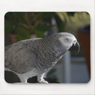 Serene African Grey Parrot Mouse Pad