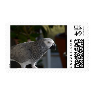 Serene African Grey Parrot Postage