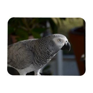 Serene African Grey Parrot Rectangular Photo Magnet