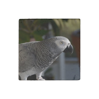 Serene African Grey Parrot Stone Magnet