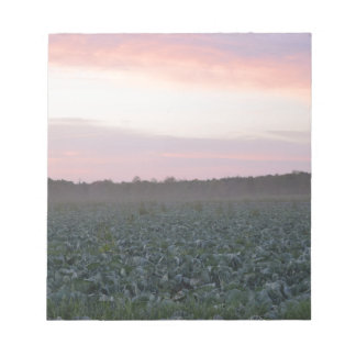 Serene_country_background.JPG Notepad