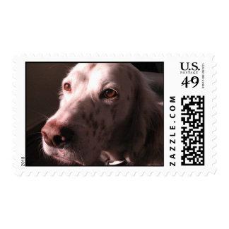Serene English Setter Stamp