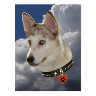 Serene Husky Dog in Fluffy White Clouds Postcard