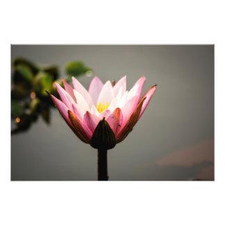 Serene Lotus Photo Print