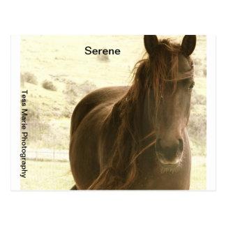 Serene Postcard