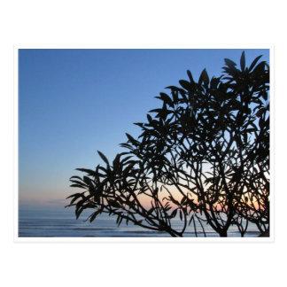 serene silhouette postcard