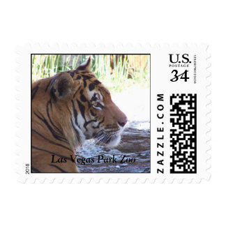 Serene Tiger U.S. Postcard Postage Stamp