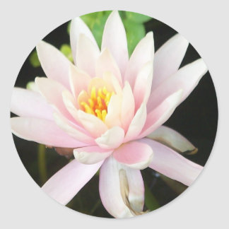 Serene Water Lilly Classic Round Sticker