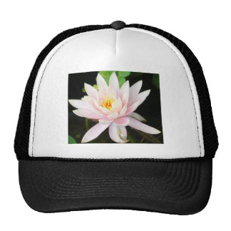 Serene Water Lilly Mesh Hats