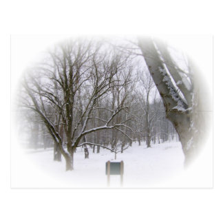 Serene Winter Sleep Postcard
