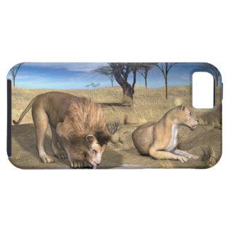 Serengeti Lions iPhone 5 Cover