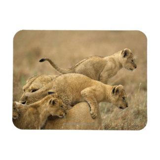 Serengeti National Park, Tanzania 2 Magnet