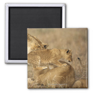 Serengeti National Park, Tanzania Magnet