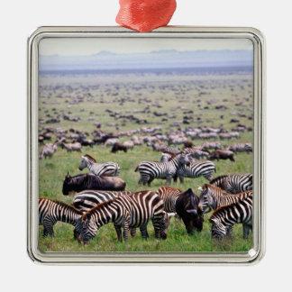 Serengetti aclara por completo de manadas de adorno cuadrado plateado