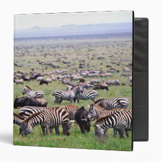 Serengetti Plains full of herds of Zebras and Binder