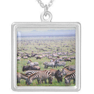 Serengetti Plains full of herds of Zebras and Silver Plated Necklace