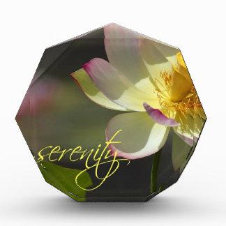 Serenidad amarilla blanca rosada del flor de Lotus