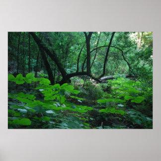 Serenidad de maderas de Muir Poster