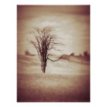 Serenity By Nature Poster