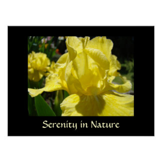 Serenity in Nature art prints Healing Touch gifts Poster
