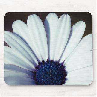 Serenity Osteospermum Mouse Pad
