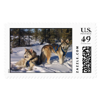 Serenity Postage Stamp
