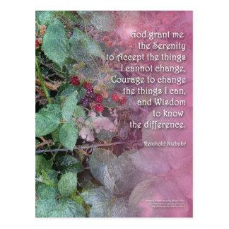 Serenity Prayer Blackberries Post Card