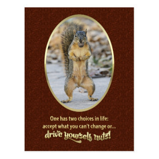 Serenity Prayer in a Nutshell Postcard
