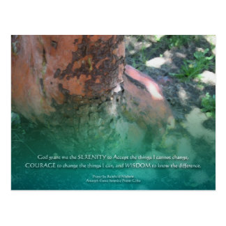 Serenity Prayer Madrone Postcard