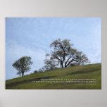 Serenity Prayer Oaks Poster