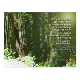 Serenity Prayer Redwoods Postcard
