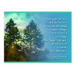 Serenity Prayer Tall Trees Postcard