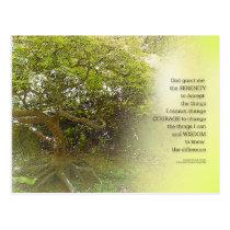 Serenity Prayer Tree Yellow Green Postcard