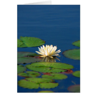 Serenity Water Lily Card