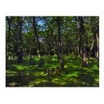 Serenity Woods Postcard