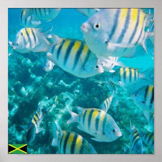 sergent major fish jamaica poster