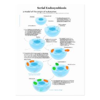 Serial Endosymbiosis Theory mitochondria plastids Postcard