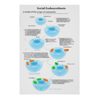 Serial Endosymbiosis Theory mitochondria plastids Poster