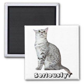 ¿Seriamente Gatito Iman Para Frigorífico