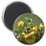 Serie 1 de las abejas de la primavera iman de frigorífico