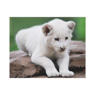 Serie blanca del cachorro de león del bebé lona estirada galerías