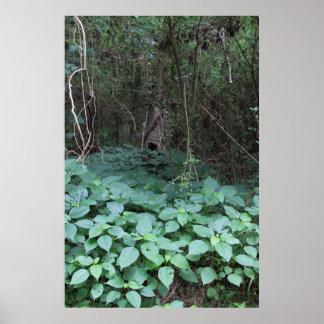 Serie botánica 120 impresiones