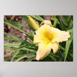 Serie botánica 65 impresiones