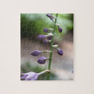 Serie botánica puzzles con fotos