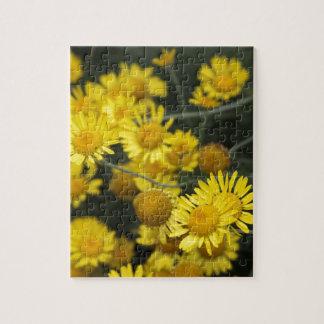 Serie botánica rompecabeza con fotos