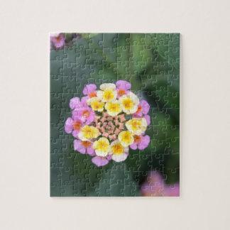 Serie botánica rompecabezas con fotos