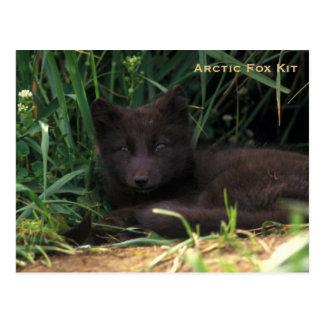 Serie de la fauna del equipo del Fox ártico # 19 Postal
