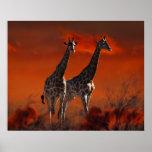 Serie de la jirafa a partir de la vida salvaje póster