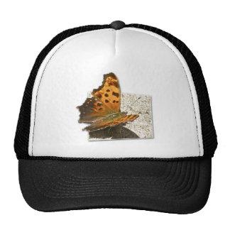 Serie de la mariposa de coma del ala del ángulo gorra
