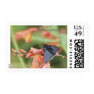 Serie de la mariposa de los sellos de EkoArts